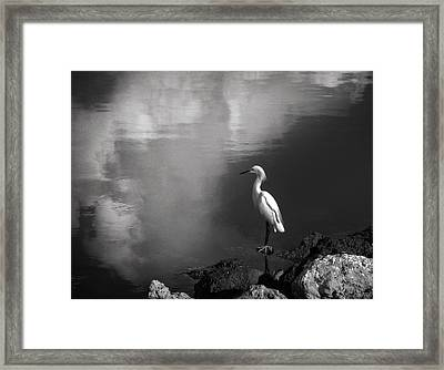 Patience In Black And White Framed Print