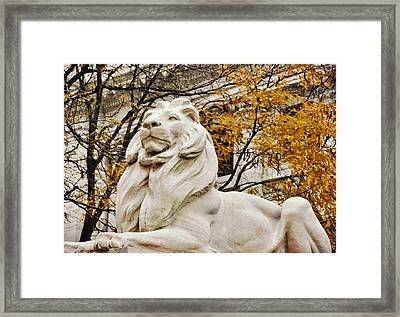 Leo Lenox Framed Print by JAMART Photography