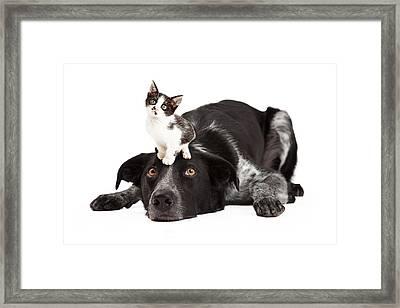 Patient Border Collie With Little Kitten On Head Framed Print by Susan Schmitz