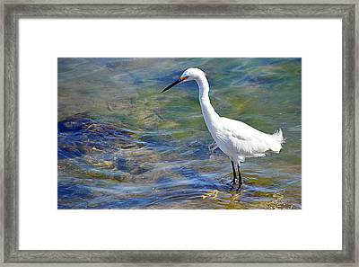 Patient Egret Framed Print by AJ Schibig