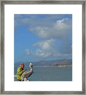 Patient Pelican Framed Print by JAMART Photography