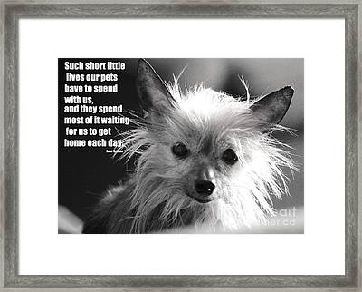 Patiently She Waits Framed Print
