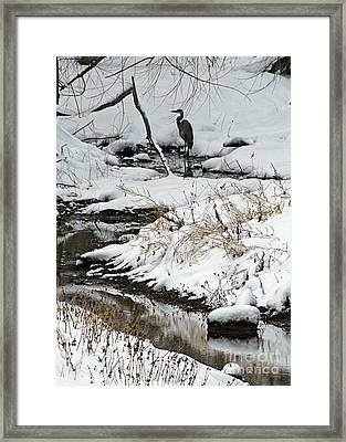 Patiently Waiting 1 Framed Print