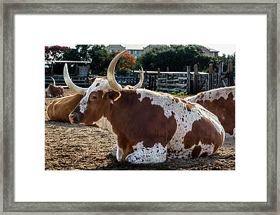 Patiently Waiting Framed Print by Kelley King