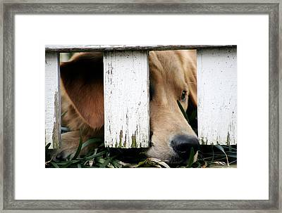 Patiently Waiting Framed Print by Patrick Biestman