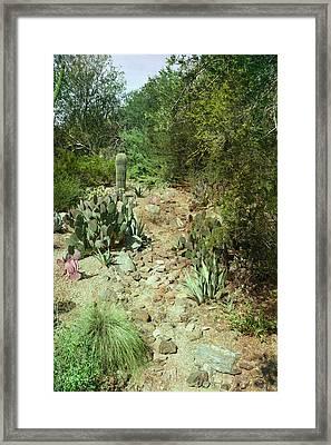 Patina Green Desert Path Framed Print