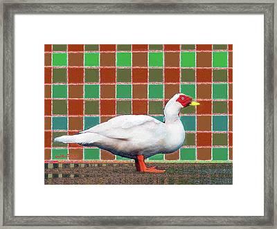 Pato Art 4 Framed Print