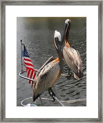 Patriotic Pelicans II Framed Print