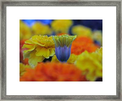 Pattern 274 _ Outstanding Framed Print