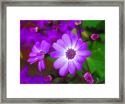 Pattern 275 _ Wild Flower Framed Print