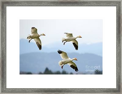 Pattern Of Three Framed Print by Mike Dawson