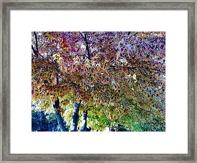 Patterned Metamorphosis Framed Print