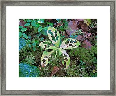 Framed Print featuring the photograph Patterns 5 by Sean Griffin