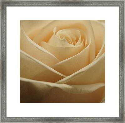 Patterns In Rose Petals  Off White Framed Print