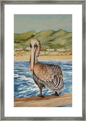 Framed Print featuring the painting Paula's Pelican by Katherine Young-Beck