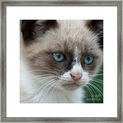 Pauls Little Cat Framed Print by Heiko Koehrer-Wagner