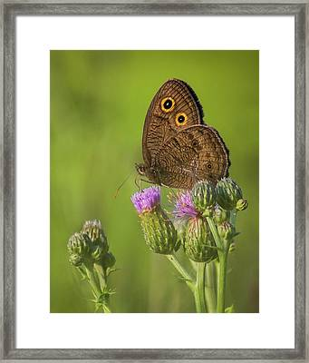 Framed Print featuring the photograph Pauper's Throne by Bill Pevlor