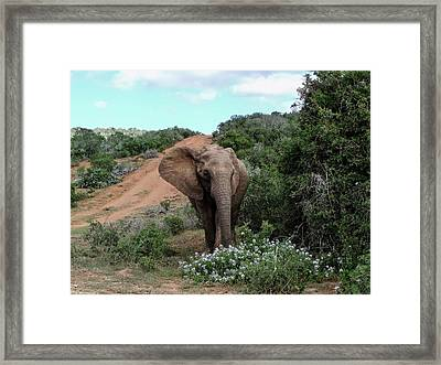 Pause To Smell The Flowers Framed Print