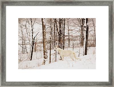 Pausing Framed Print by Cheryl Helms