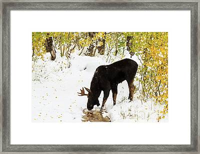 Pausing For A Drink Framed Print by TL Mair