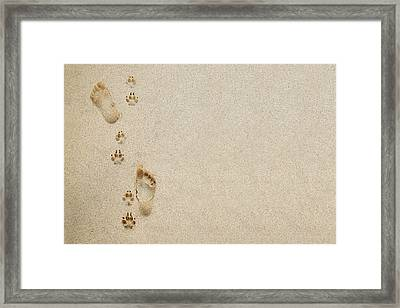 Paw And Footprint 1 Framed Print by Brandon Tabiolo - Printscapes