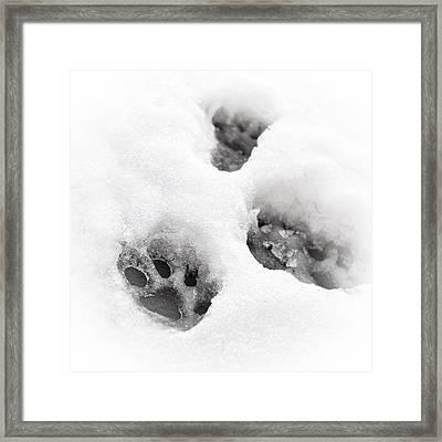 Paw Print  Framed Print