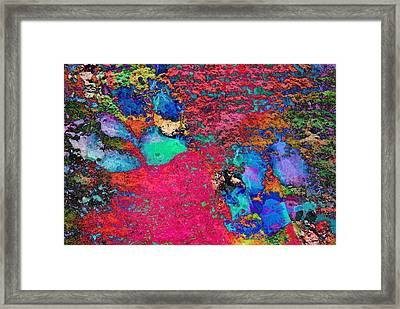Paw Prints Colour Explosion Framed Print