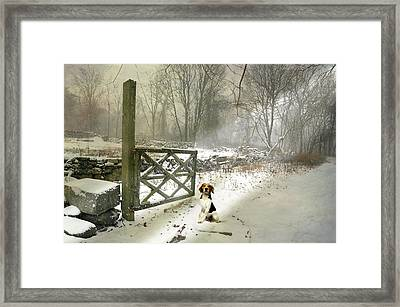 Paw Prints Framed Print by Diana Angstadt