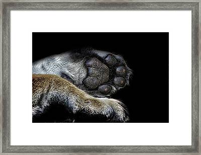 Paw Prints Framed Print by Martin Newman