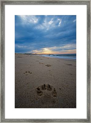 Pawprints Framed Print by Mike Horvath