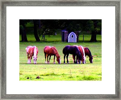 Paxon Clydesdales Framed Print by Kit Dalton