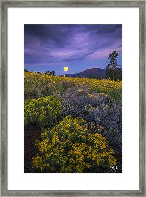 Payoff Framed Print by Peter Coskun