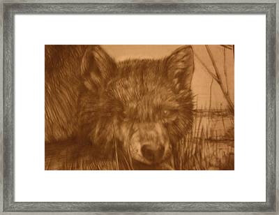 Pd9-10 Framed Print by Shannon Rains