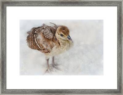 Pea Chick Cuteness Framed Print