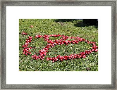 Peace Among The Kapok Flowers Framed Print