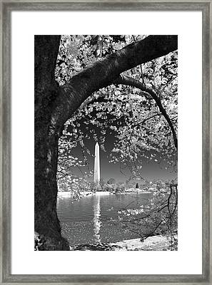 Framed Print featuring the photograph Peace And Harmony by Mitch Cat