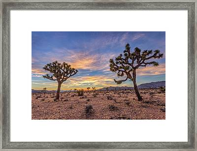 Peace At Joshua Tree Framed Print by Peter Tellone