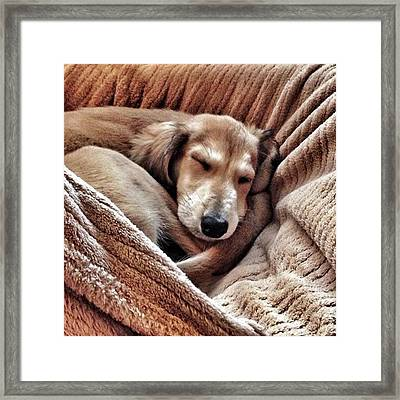 Peace At Last #saluki Framed Print