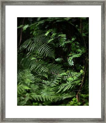 Peace Be Still ... Framed Print by Jeanette C Landstrom