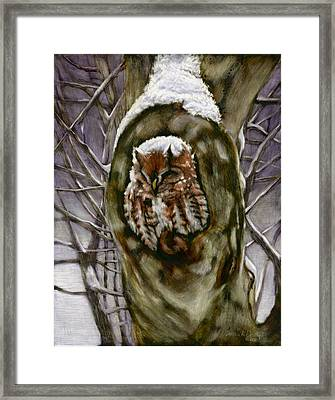 Peace In The Storm - Eastern Screech Owl Framed Print by Susan Donley