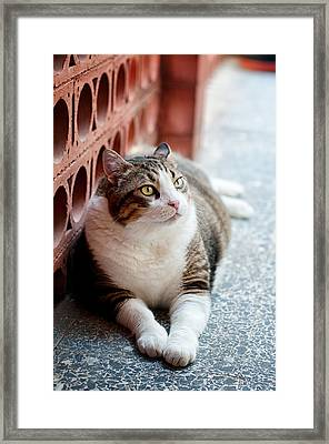 Framed Print featuring the photograph Peace by Laura Melis