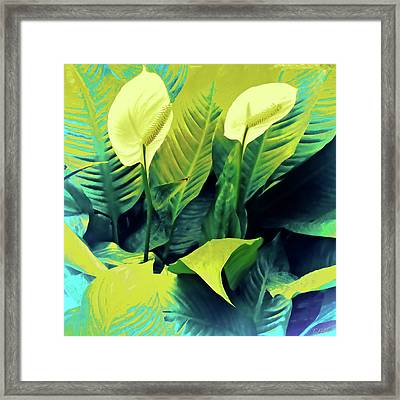 Peace Lilies Framed Print by Tony Grider