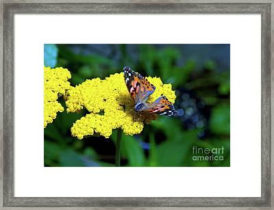 Peace Love And Understanding Framed Print by Robyn King