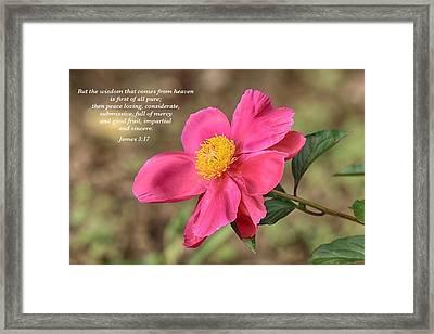 Peace Loving Framed Print by Lynn Hopwood