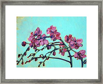 Peace Orchids Framed Print by Sheila Tajima