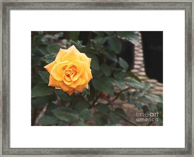 Peace Rose Porch Framed Print by Sabrina Wheeler