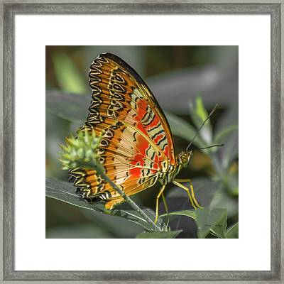 Peaceflyer Framed Print by Betsy Knapp