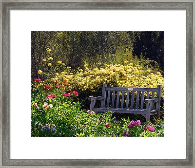 Peaceful Framed Print by Amy Fose