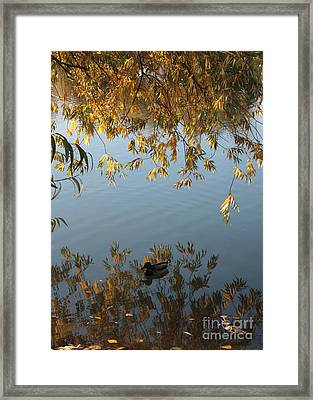 Peaceful Autumn Day Framed Print by Carol Groenen