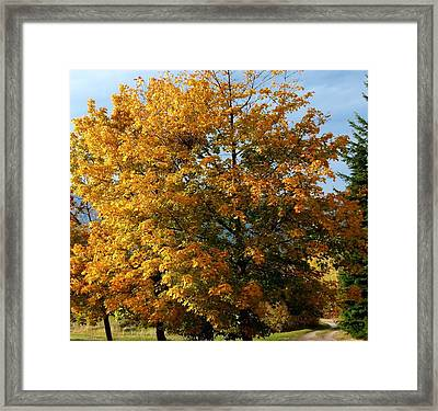 Peaceful Country Road Framed Print by Will Borden